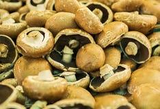 Stapel von Pilzen Lizenzfreie Stockbilder
