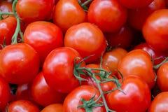 Stapel von roten Tomaten Lizenzfreie Stockfotos