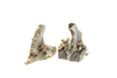 Stapel von Schweinefleischknochen auf weißem Hintergrund lizenzfreies stockfoto