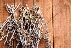 Stapel von Zweigen Lizenzfreies Stockfoto