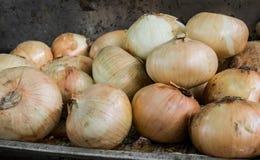 Stapel von Zwiebeln, von Gelb oder von Brown-Zwiebeln lizenzfreies stockbild