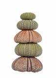 Stapel zeeëgelshells stock fotografie