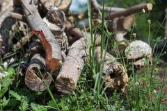 Stapelbrandhout op groen gras stock foto