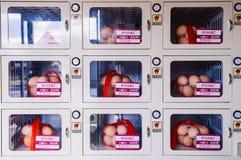 Stapeleieren in zakken die door automaat bij supermarkt in J verkopen stock foto