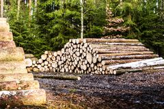 Stapels van brandhout in de zaagmolen royalty-vrije stock afbeelding