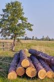 Stapels van brandhout in de zaagmolen Stapel van brandhout De Achtergrond van het brandhout royalty-vrije stock foto's