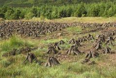 Stapels van gras in Ierland Stock Afbeeldingen