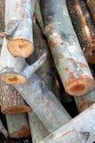 Stapels van hout Royalty-vrije Stock Foto's