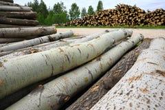 Stapels van logboeken en boomstammen van sawdownbomen royalty-vrije stock foto
