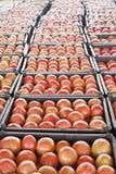 Stapels van tomaten Royalty-vrije Stock Foto