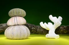Stapels van zeeëgelshells en koraal Royalty-vrije Stock Foto