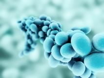 Staphylococcus Stock Photography