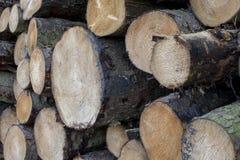 Stapla av nytt sågad mjukt träslag loggar att vänta på samlingen arkivbilder