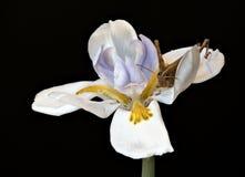 Staplad makroblomma med gräshoppan Arkivfoto