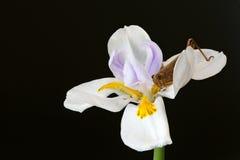 Staplad makroblomma med gräshoppan Royaltyfri Foto