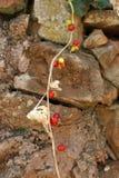 Staplad stenvägg med hängande bär Royaltyfri Fotografi