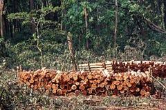 Staplade journaler av klippta Forest Trees Fotografering för Bildbyråer