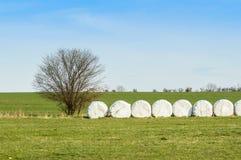 Staplade och packade höbaler, i ett kultiverat fält arkivfoton