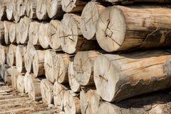 Staplade trädstammar royaltyfri fotografi