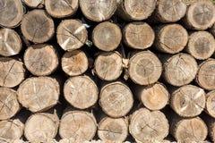 Staplade trädstammar arkivbild