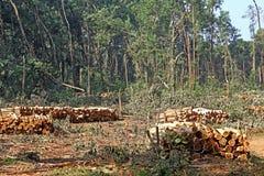 Staplade trädstammar från skogsavverkning fotografering för bildbyråer