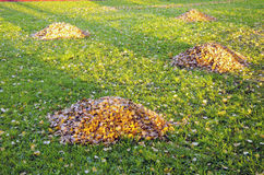 staplar för leaves för höstcleaningträdgård raken gården Royaltyfri Fotografi