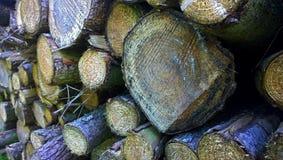 Staplat snitt för träd journaler ner Royaltyfria Foton