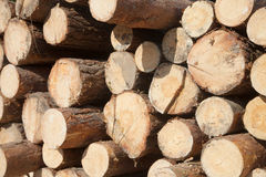 Staplat trä sörjer timmer Royaltyfri Foto