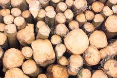 Staplat trädträ loggar bakgrund Royaltyfria Foton