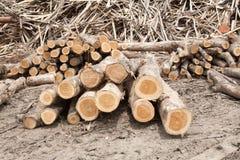Staplat trädträ loggar bakgrund Arkivbilder