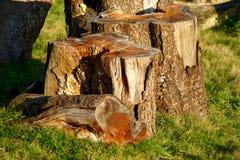 Staple of logs Stock Image