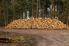 Staple of wood. A huge staple of Wood stored near a dirt road in a forest Stock Photo