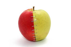 Stapled apple royalty free stock photo