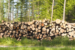 Stapled logs Royalty Free Stock Photography