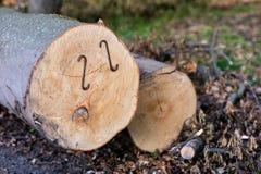 Staples a employé pour les rondins en bois Accessoires pour fixer le bois dans Photos stock