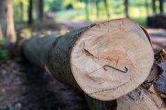 Staples a employé pour les rondins en bois Accessoires pour fixer le bois dans Photographie stock