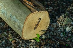 Staples used for wood logs. Accessories for securing wood in the Stock Images