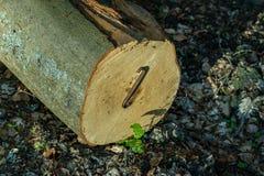 Staples usou-se para os logs de madeira Acessórios para fixar a madeira no Imagens de Stock