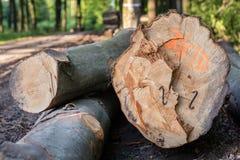 Staples usou-se para os logs de madeira Acessórios para fixar a madeira no Fotos de Stock