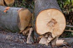 Staples usou-se para os logs de madeira Acessórios para fixar a madeira no Fotos de Stock Royalty Free