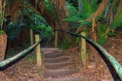 1000 stappen in Dandenong-waaiers, Victoria, Australië Stock Afbeelding