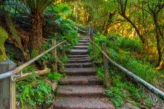 1000 stappen in Dandenong-waaiers, Victoria, Australië Royalty-vrije Stock Afbeelding