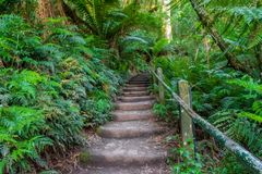 1000 stappen in Dandenong-waaiers, Victoria, Australië Royalty-vrije Stock Fotografie