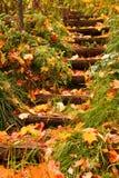 Stappen in de herfst royalty-vrije stock foto