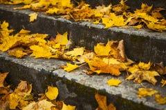 Stappen in gele bladeren in de herfst Stock Foto