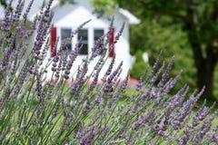 Stappla bin i lavendeln royaltyfria bilder