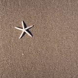 A starfish on the brown beach sand. Top view Royalty Free Stock Images