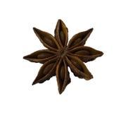 Star anise. On white background Stock Image