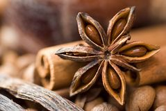 Star anise. Stock Photography
