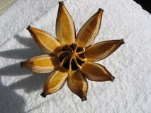 Star Anise. Used for five-spice powder in Chinese cooking stock images